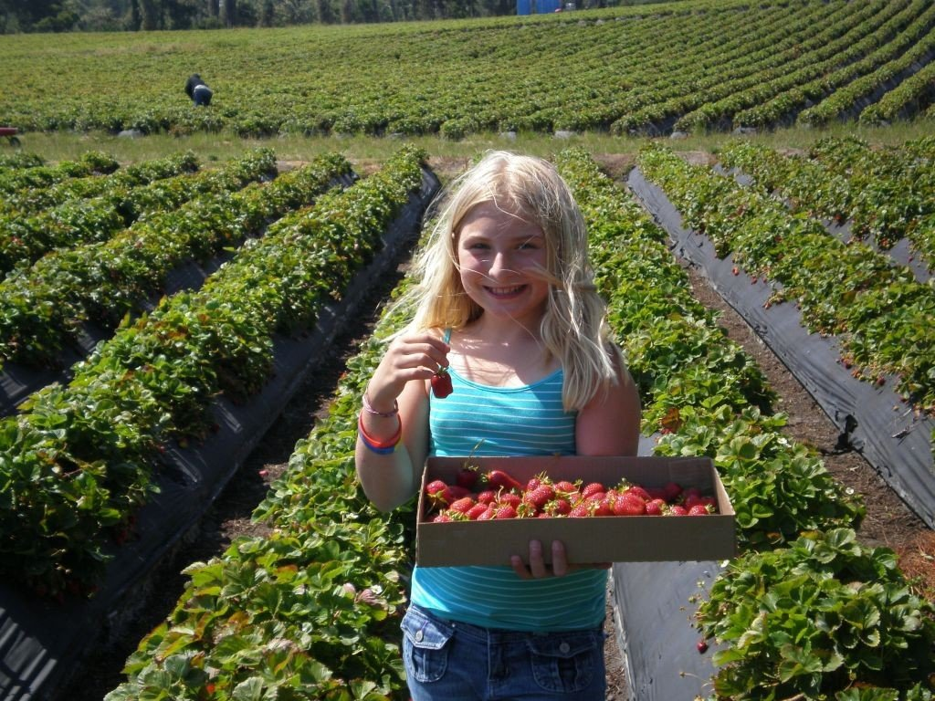 Half moon bay strawberry picking. Photo: Visithalfmoonbay.org