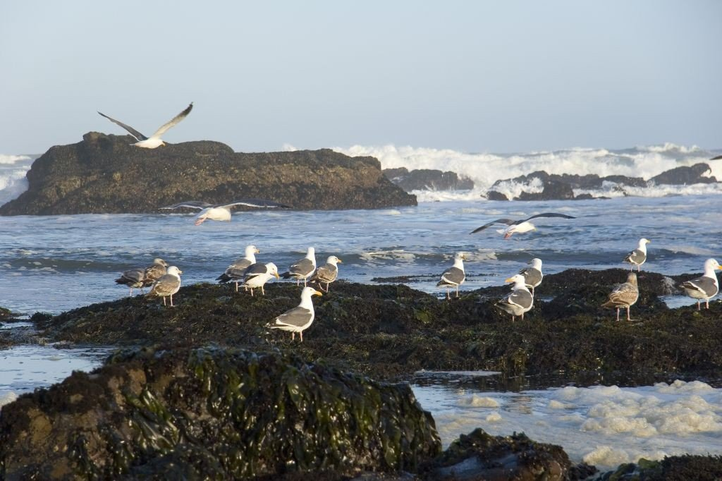 Half moon bay tide pools. Photo: Visithalfmoonbay.org