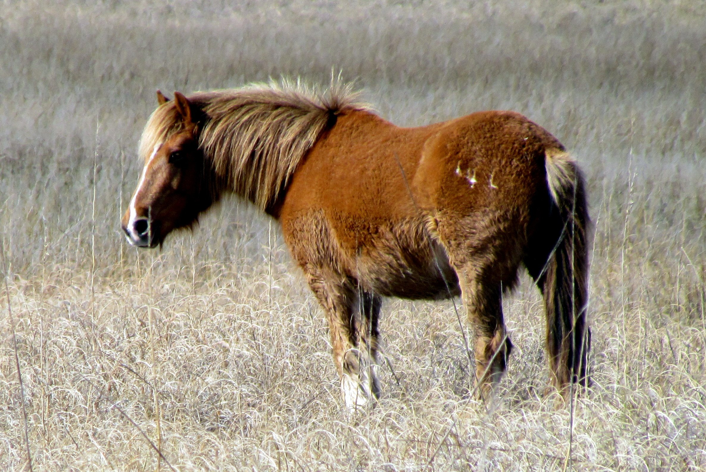 Shackleford Banks. Photo : Bobistraveling CC by 2.0 via Flickr