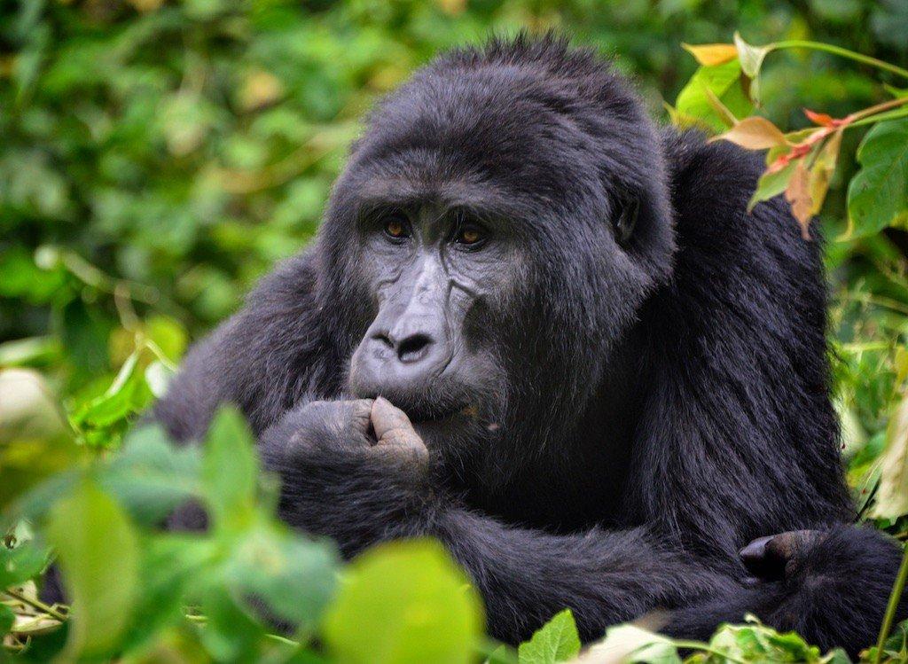 best African safaris Photo: Rod Waddington via Flickr/ (CC BY-SA 2.0)