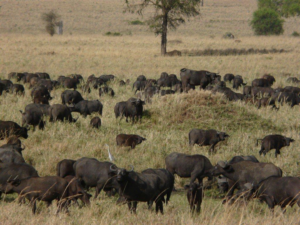 best African safaris Photo: Mark Jordahl via Flickr/ (CC BY 2.0)