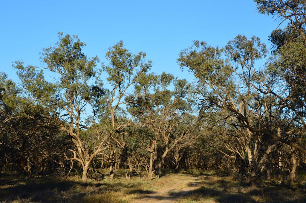 Australia-Camping-Corynnia Station3 - 1024 x 681
