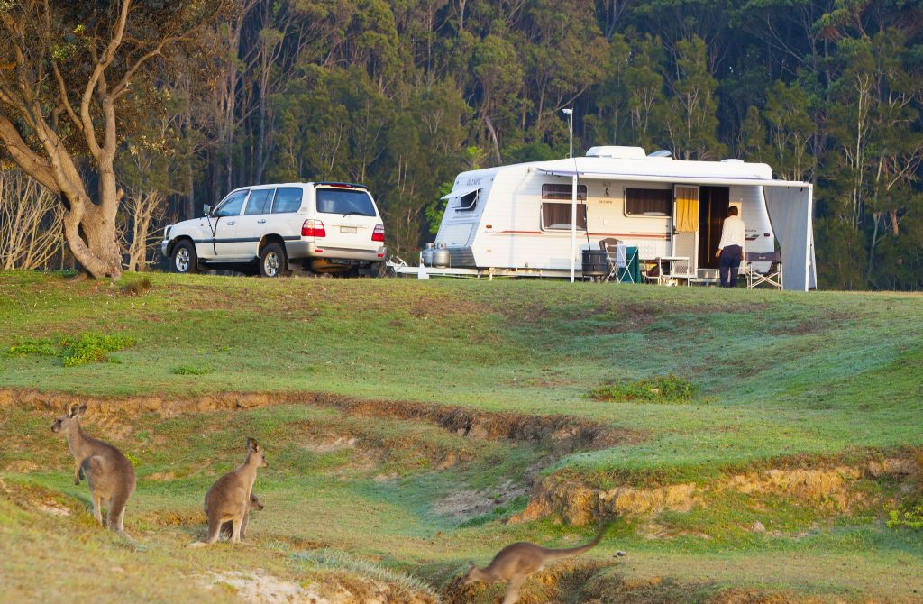 Australia-Camping-Potato Point_JP 13 kangaroo - 1024 x 670