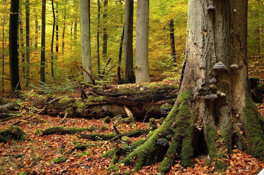 Hainich National Park Photo: Rüdiger Biehl / NLP Hainich Verwaltung