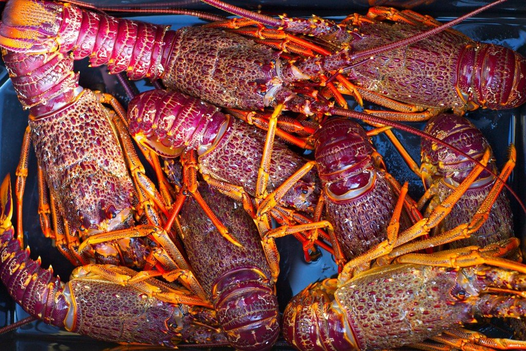 Best Food For Crayfish