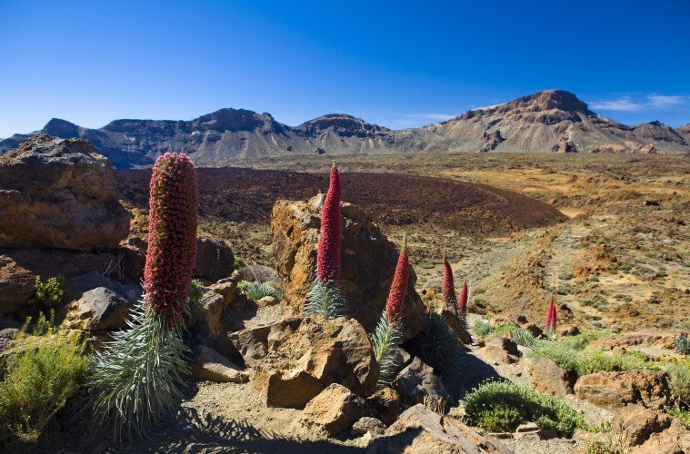 The Tardis Has Landed Dr Who Locations In Tenerife Ecophiles