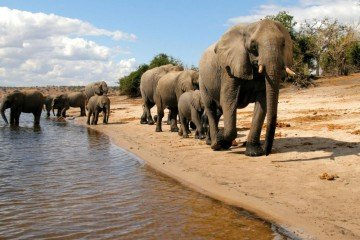 Chobe national park, Botswana Top 100 Sustainable Destinations