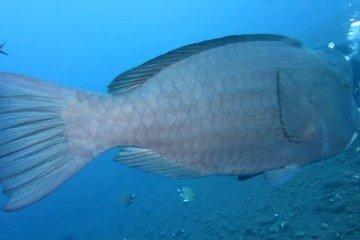 Bali-Tulamben Dive1