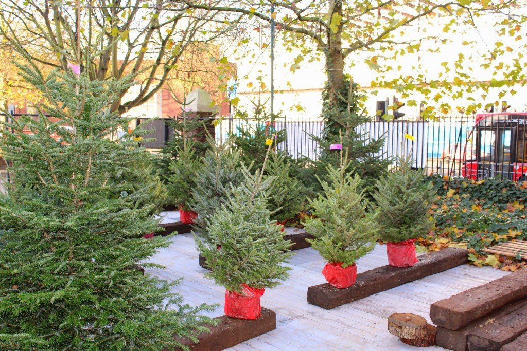 Eco-friendly christmas: Real or artificial Christmas trees?