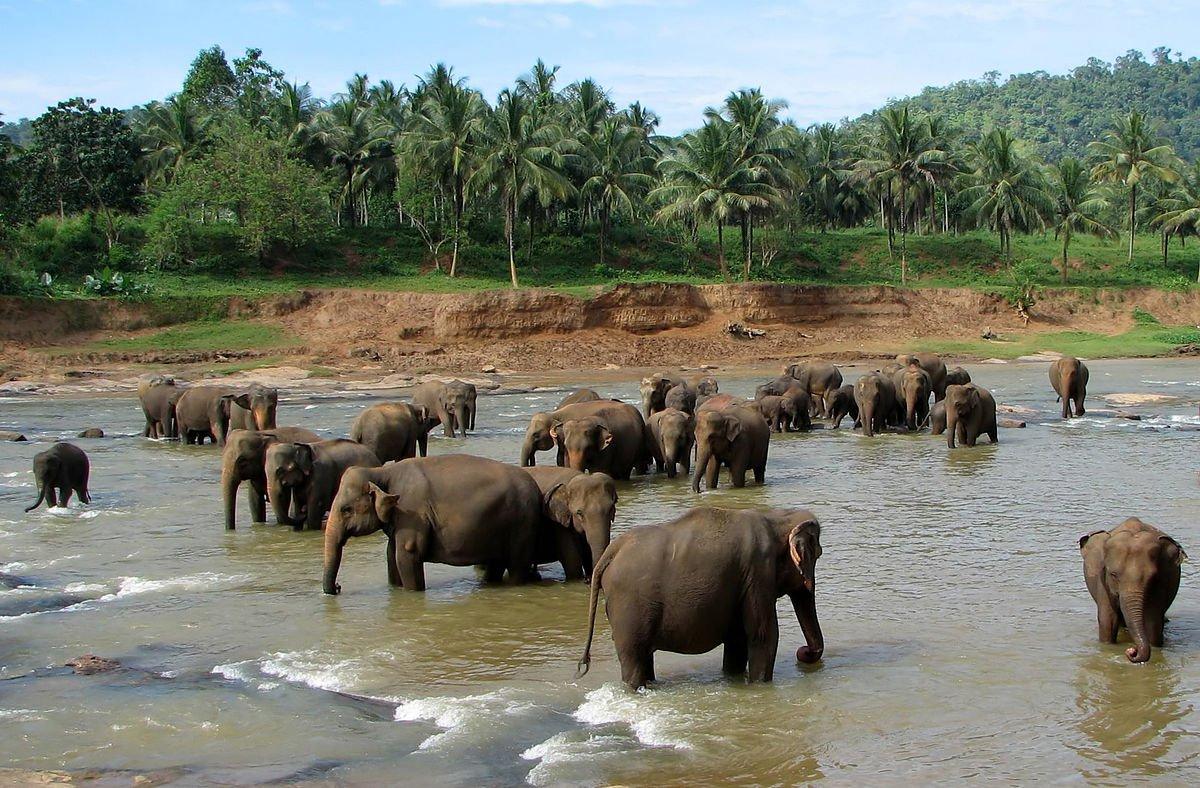 Sri Lanka Pinnawala_01