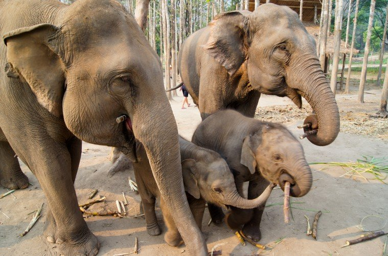 elephant sanctuary orphaned elephants