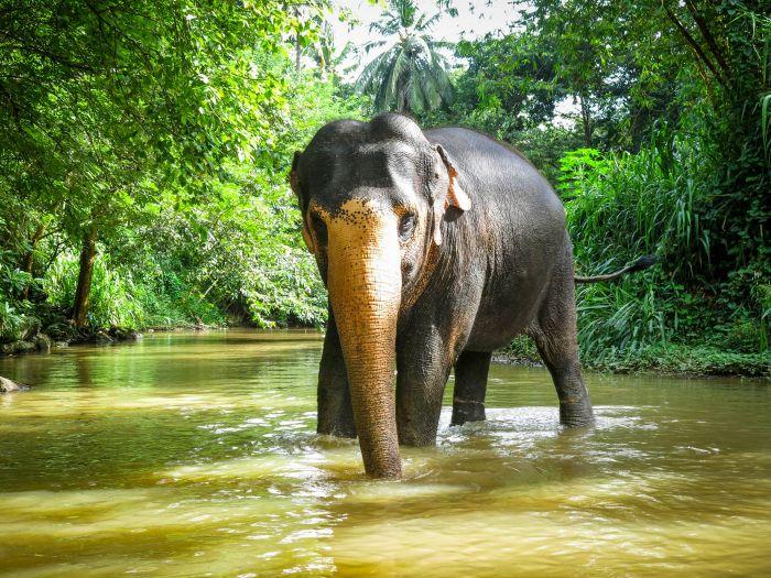 Photo: http://www.elephantfreedomproject.com/