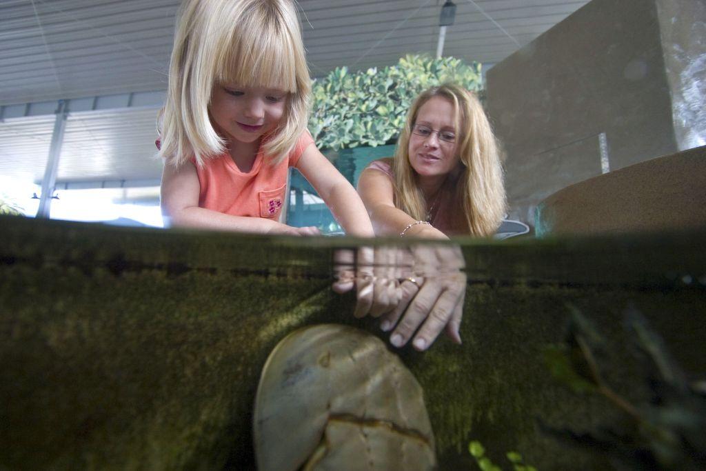 Touch Tank at the Aquarium