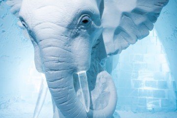 Sweden Icehotel Elephant in the Room