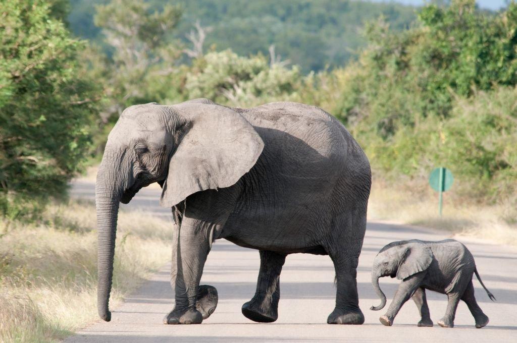 Mpumalanga-South Africa-Mama and baby Elephants. Photo: Chris-Eason-CC-2.0-via-Flickr