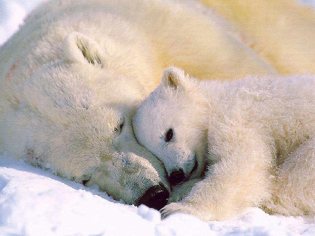 Polar Bear family Photo-bm.iphone CC 2.0 via Flickr
