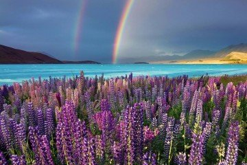 New zealand things to do: Lake Tekapo colorful lakes