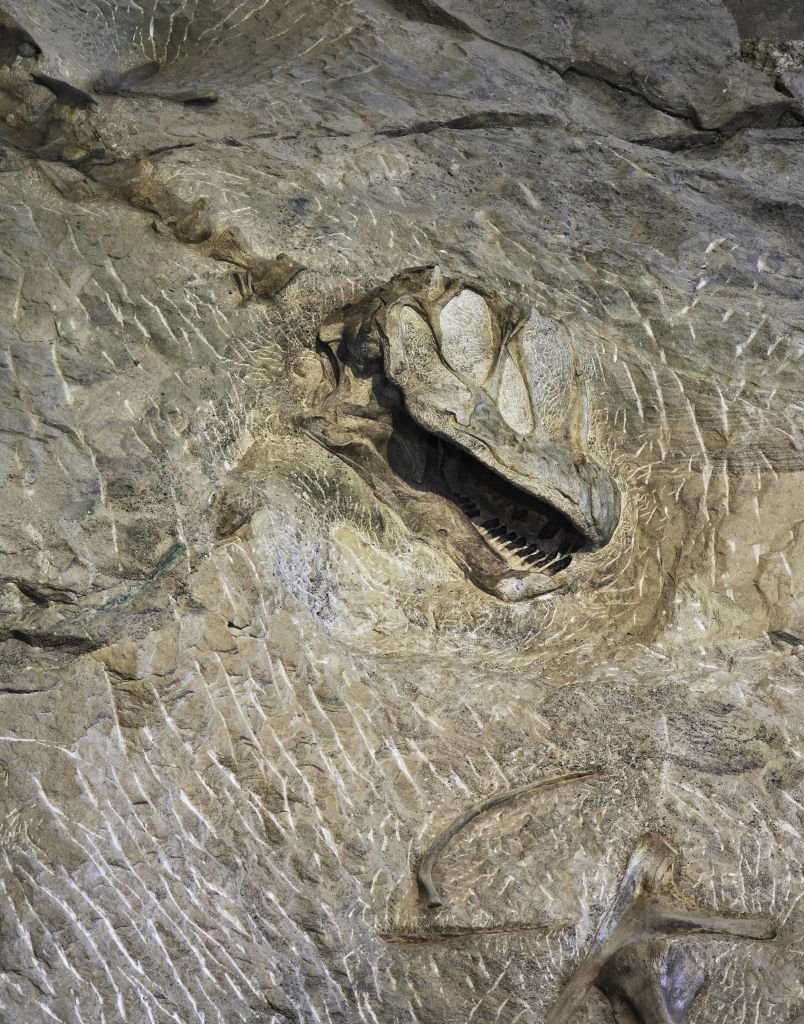 Dino-Skull at Dinosaur National Monument - 804 x 1024