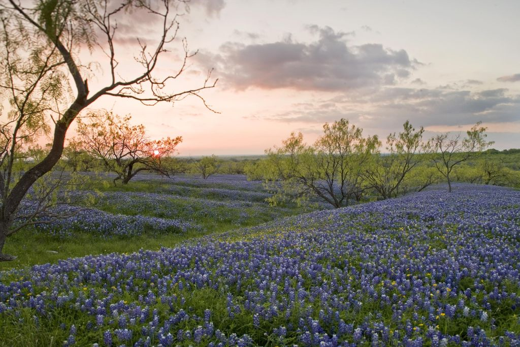 Texas prairie- Bluebonnets- Photo by Texas Parks and Wildlife Department CC 2.0 via Flickr