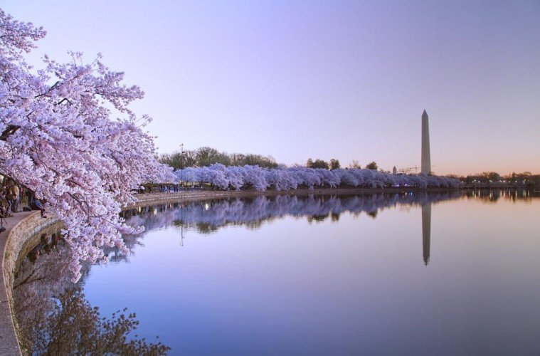 Washington trip Tidal Basin- Cherry Blossoms- by Abhijeet Karle - via Flickr - 1024 x 700