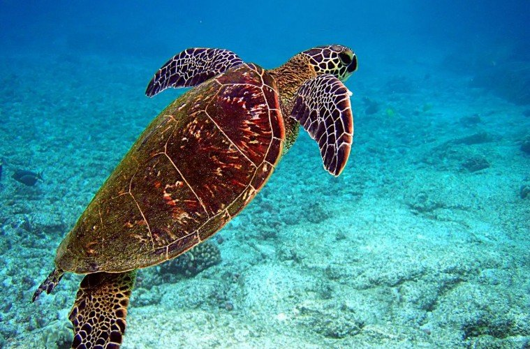 sea turtle. how to protect the ocean