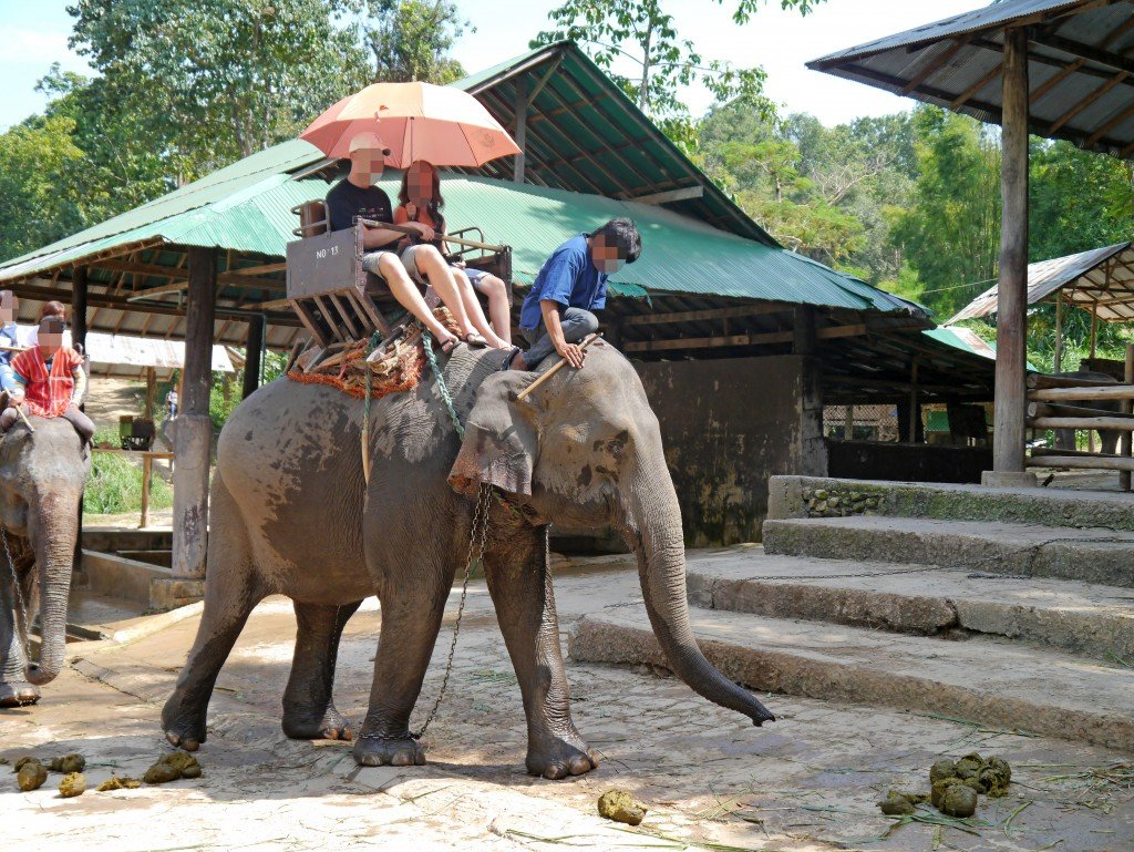 Shun elephant riding for a more ethical elephant experience. Photo: World Animal Protection
