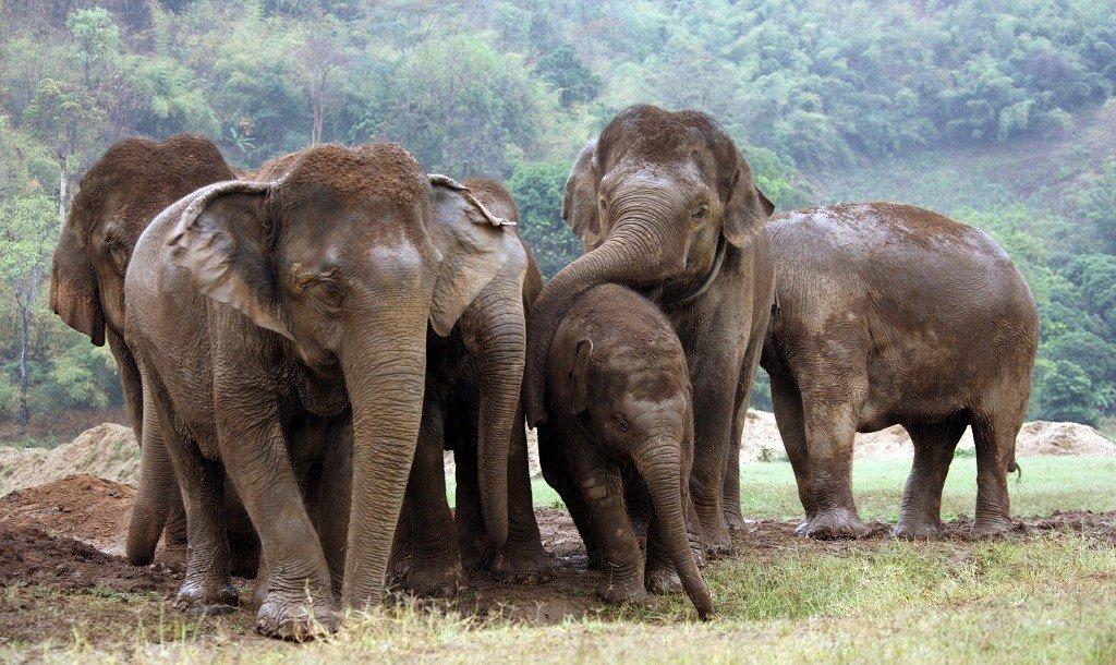 A playful herd in Elephant Nature Park. Photo: Rickshaw Travel