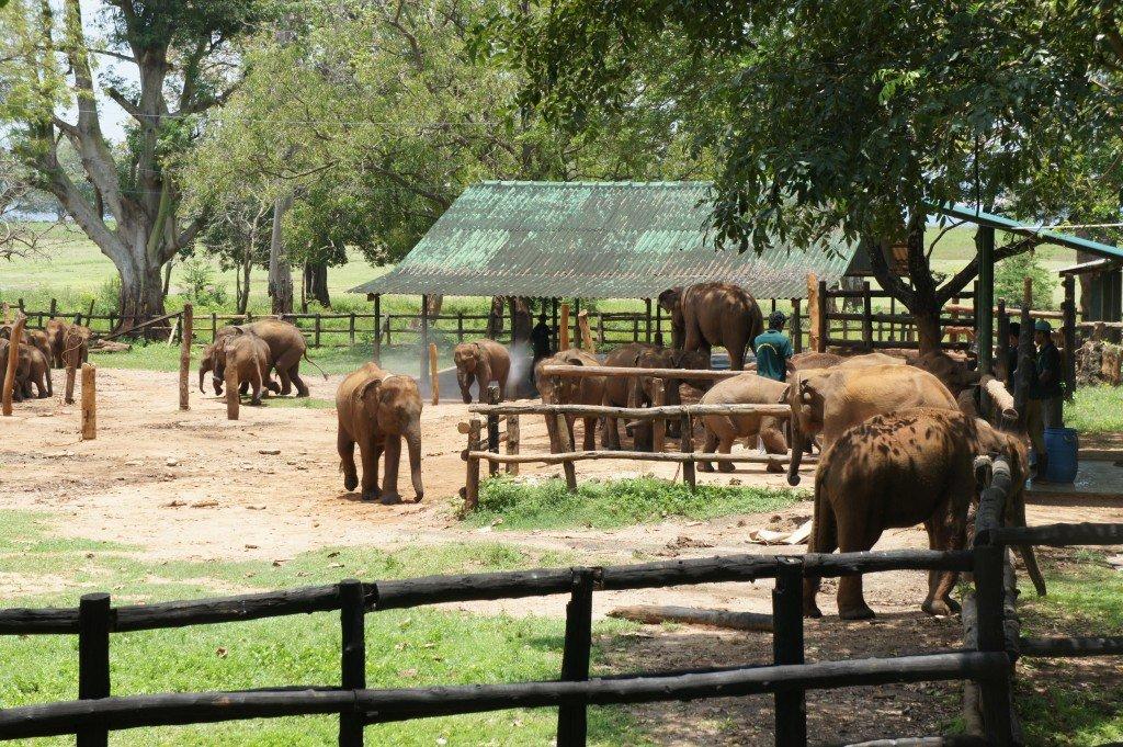 Visit orphaned elephants at the Elephant Transit Home in Sri Lanka. Photo: Rickshaw Travel