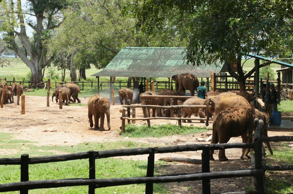 elephant transit center sri lanka Find elephants sri lanka stock images in hd and millions  sri lanka - mother asian elephant protects here baby elephants from tourist safari  elephant transit.