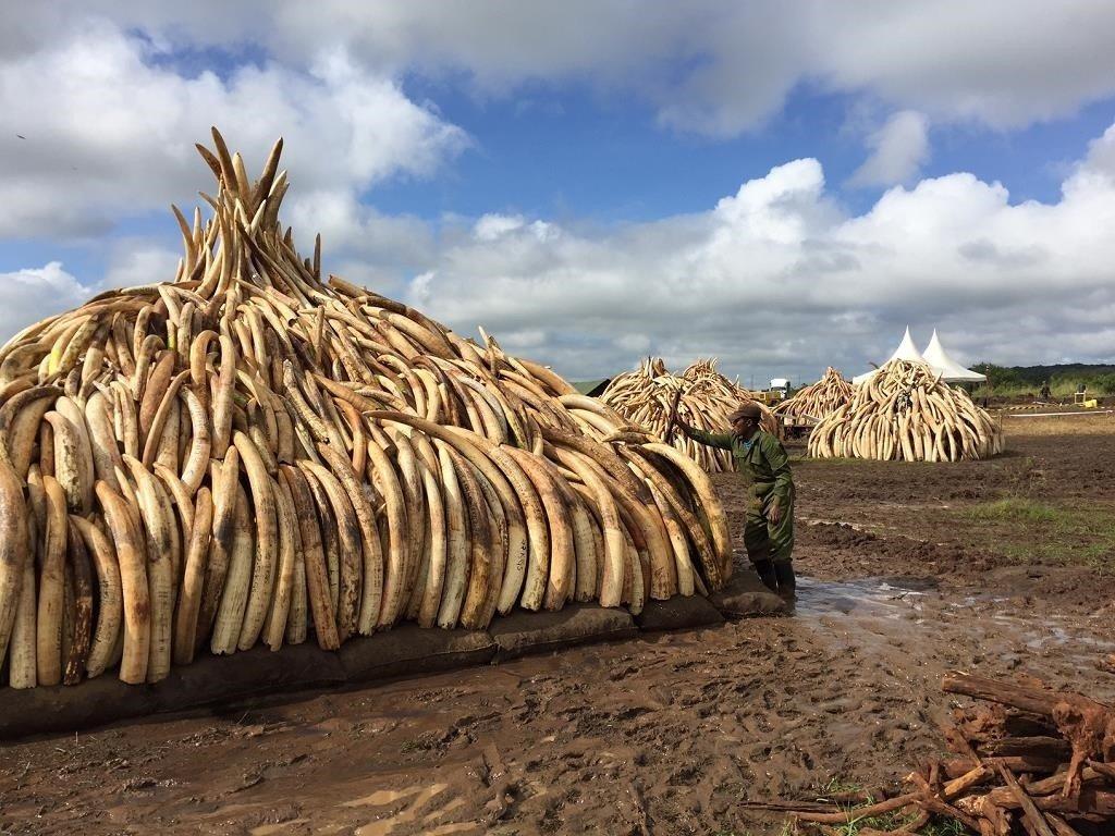 ivory seizures in Kenya