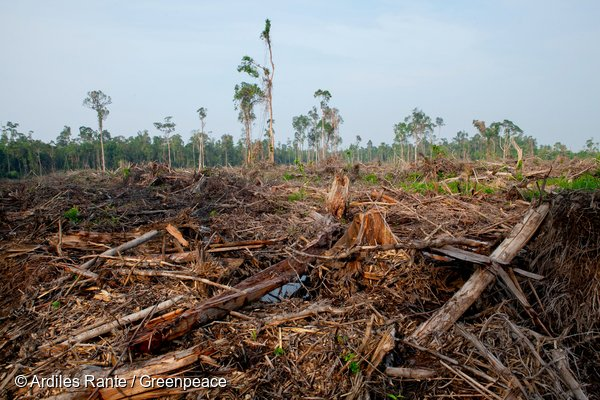 Deforestation and drainage on the boundary of an area in the PT Bumi Sawit Sejahtera (IOI) oil palm concession in Ketapang, West Kalimantan. The area, which was later identified for company as a No Go area of forest containing HCVs, has not been planted.