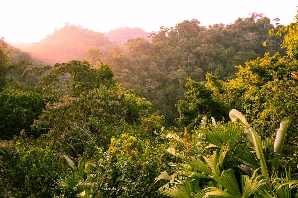 Osa Peninsula Jungle