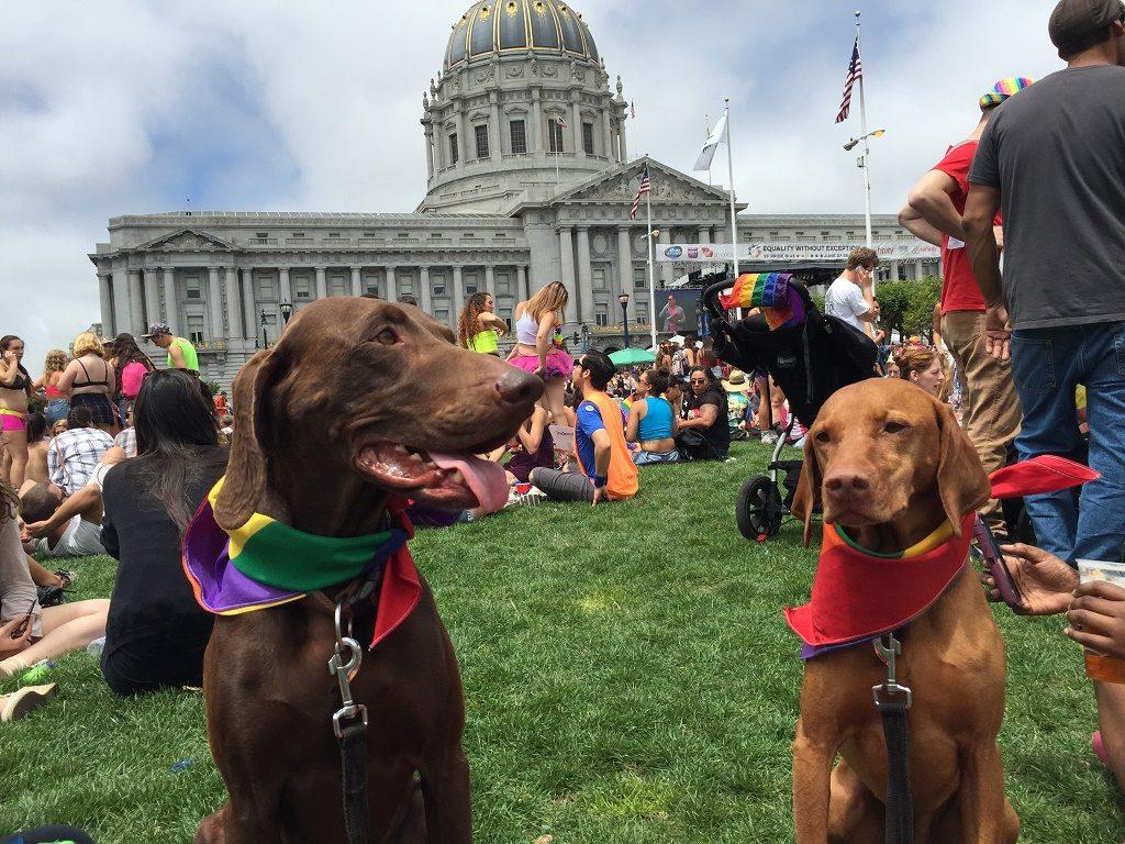 dog rescue US San Francisco8