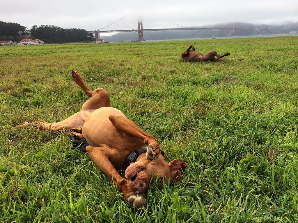 dog rescue San Fran