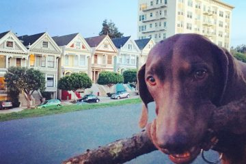 Dog-friendly San Francisco. how to travel with pets.
