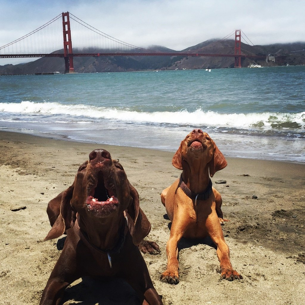 dog rescue: San Francisco is a great city for dogs