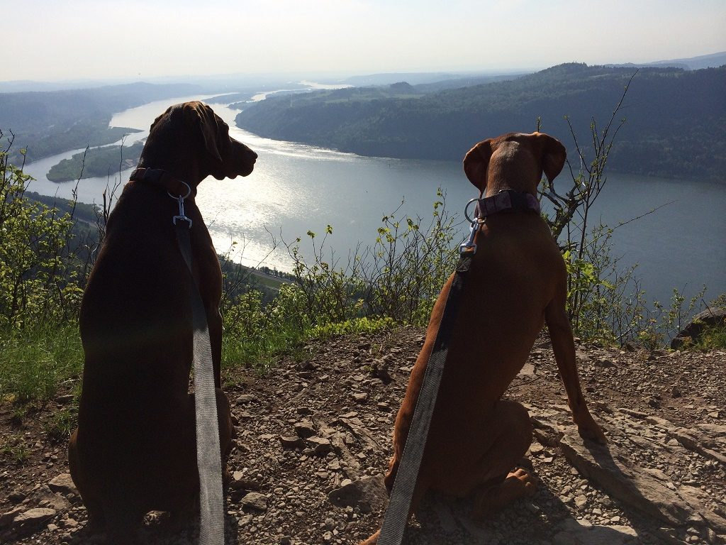 dog rescue: A spot of soul searching!