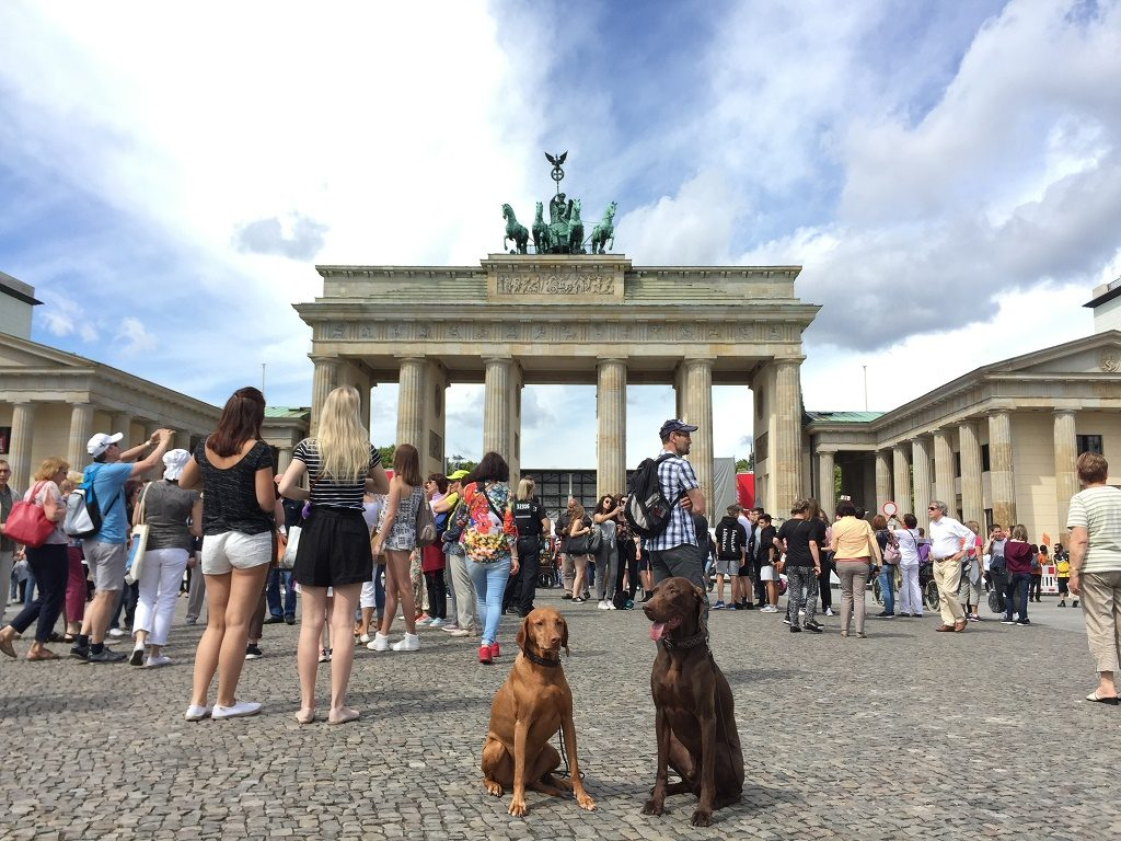 Lotta and Louis - the two dogs at Brandenburg Gate