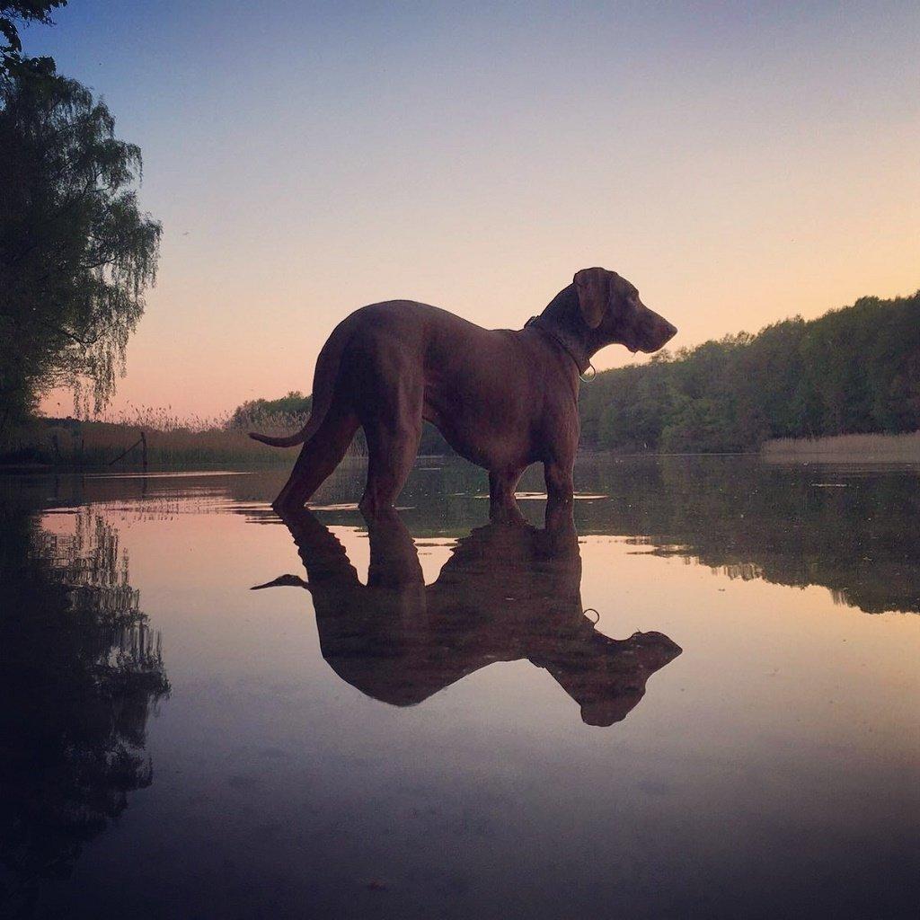 dog rescue. Grunewald