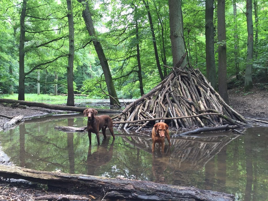 Germany has fantastic green spaces for dogs