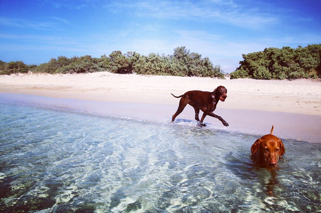 dog rescue greece beach