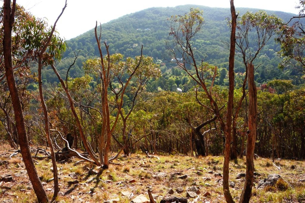 On the trail-Macedon Ranges Walking Track