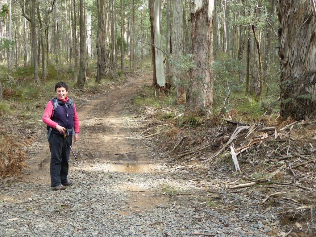 Australia-Walking in the Macedon Ranges