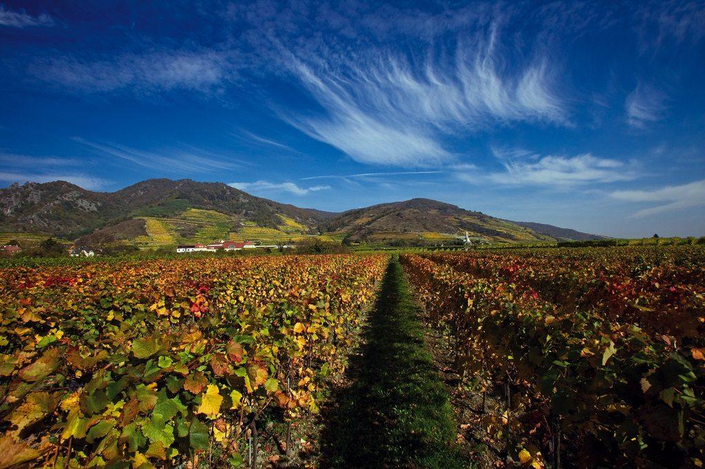 Austria-vineyards-wachau-valley-oesterreich-werbung-Himsl