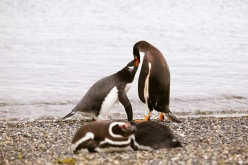 Best of 2016: Chile Penguins