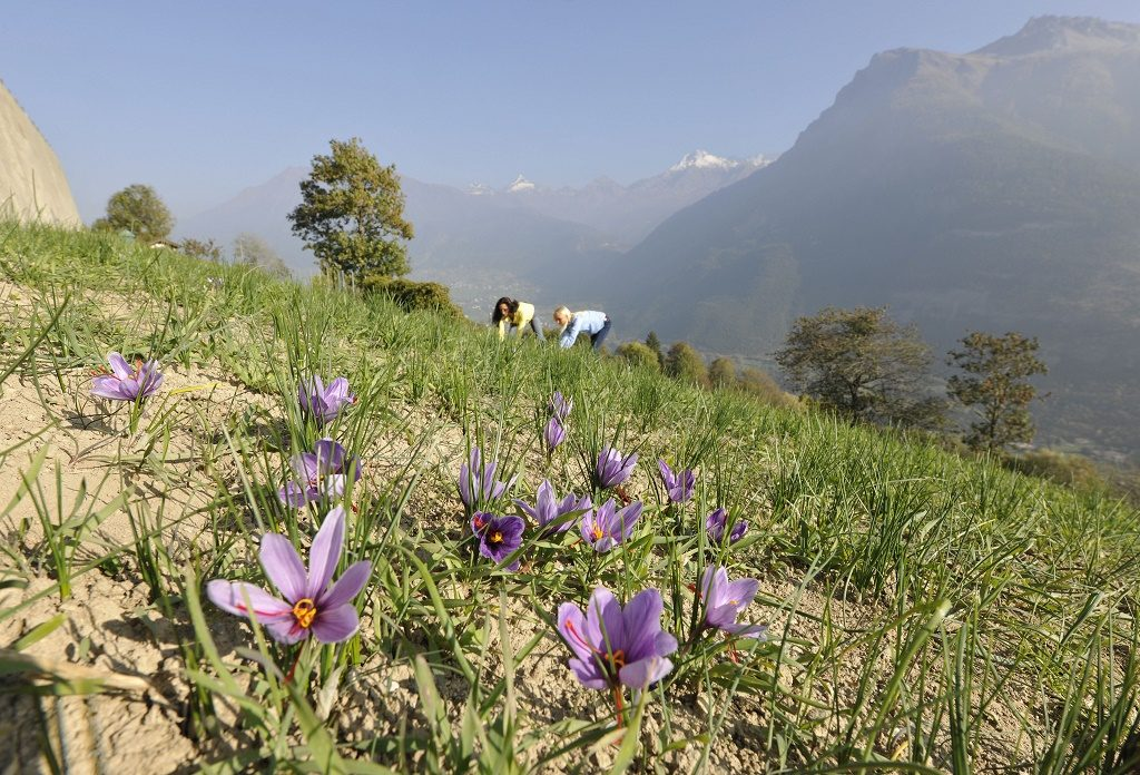 Landscaping A Sunny Hillside : The saffron village of mund is located on a sunny hillside at m