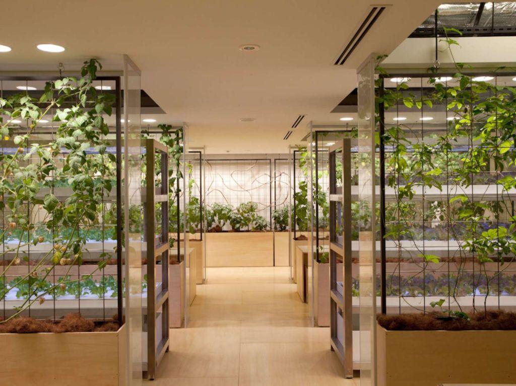Tokyo Urban Farm Pasona5 - 1024 x 767