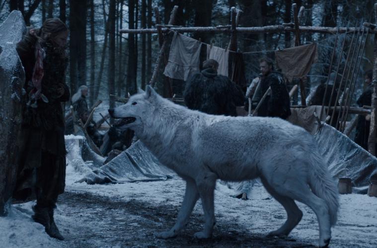 direwolf game of thrones