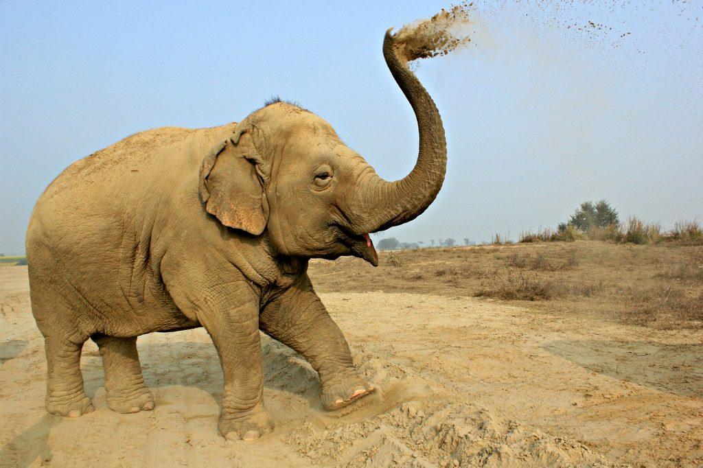 India Elephants2 WildlifeSOS