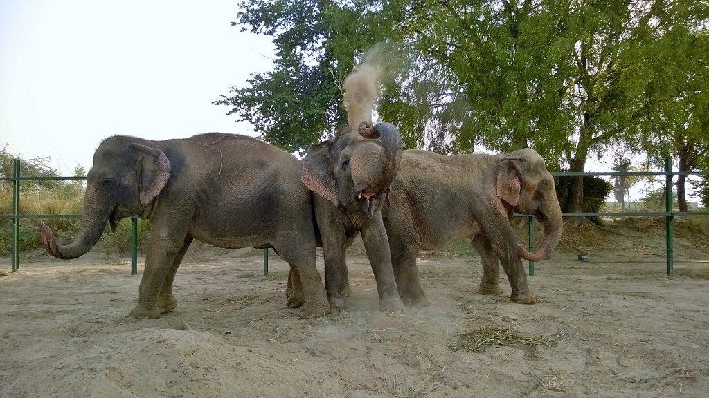 India Elephants3 WildlifeSOS